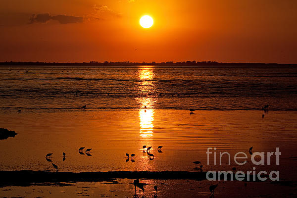 Sunset with the Birds Photo by Meg Rousher